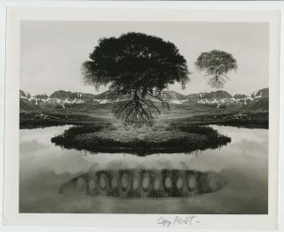 """Untitled"" (Floating Tree and Peapod). Photograph ""Copy Print"" with Typed Letter Signed on..."